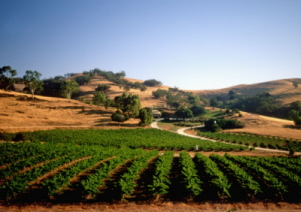 Barossa Valley private wine tour