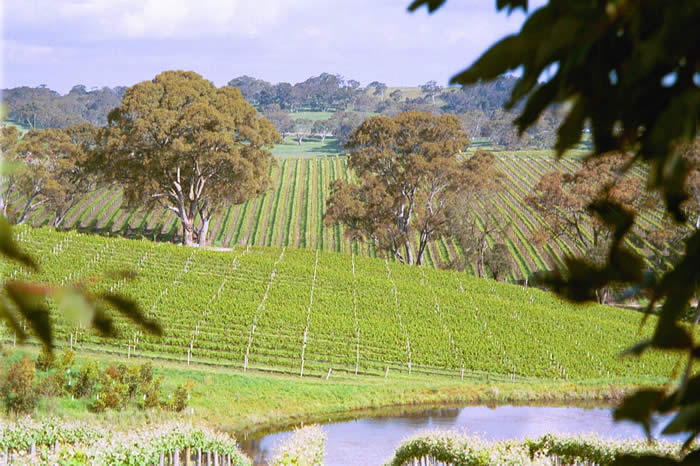 Private wine tour in the Adelaide Hills wine region